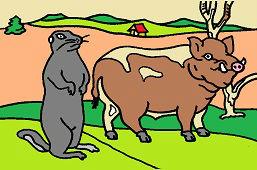 Дикая свинья и суслик