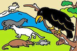 Врана и другие животные
