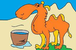 Жаждущий верблюд