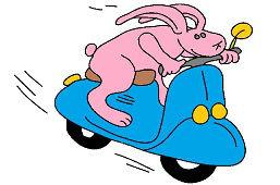 Заяц на мотоцикле