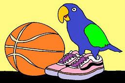 Попугай в кроссовках
