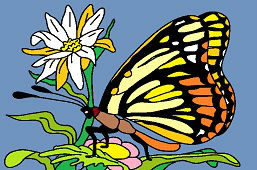 Бабочкa и цветок