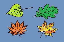 Вы знаете листья деревьев?