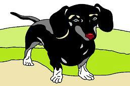 Такса собака