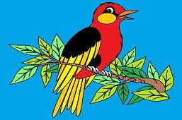 Птица певец